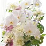 胡蝶蘭のお供え花